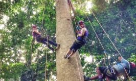 Tree Climbing in Costa Rica