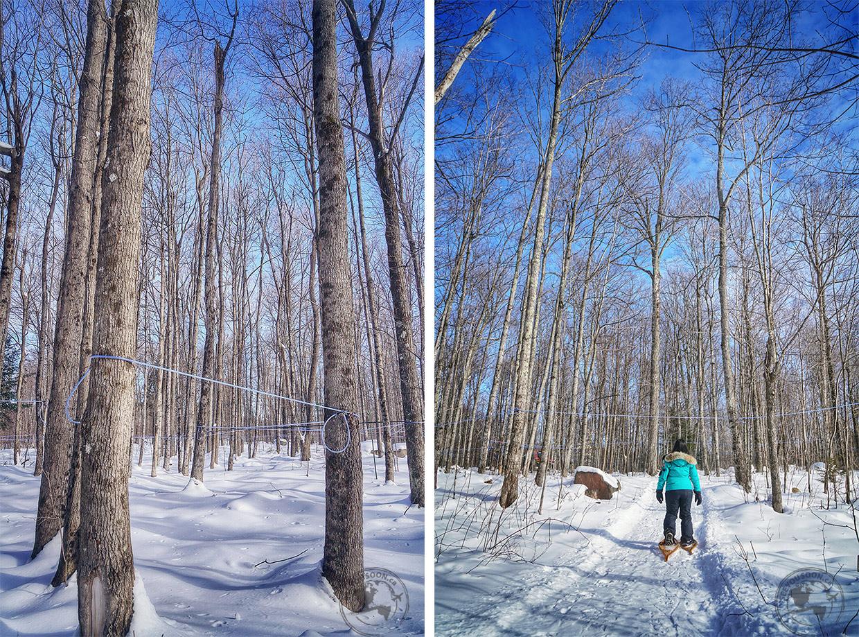 Snowshoeing in Ontario